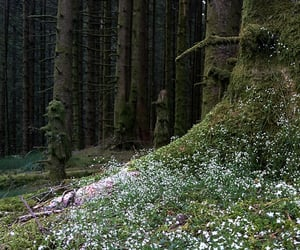 flowers, forest, and moss image