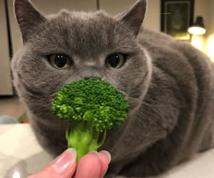 animals, broccoli, and cat image