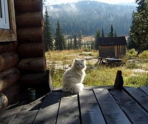 cat, country, and summer image