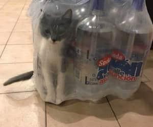 agua, foto, and gatito image