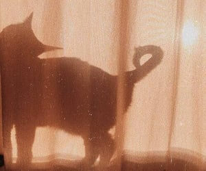 cat, aesthetic, and shadow image