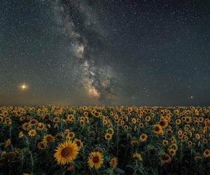 stars and sunflower image