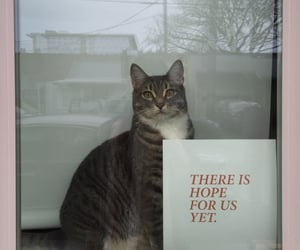 cat, animal, and hope image