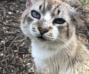Animais, cat, and inspiration image