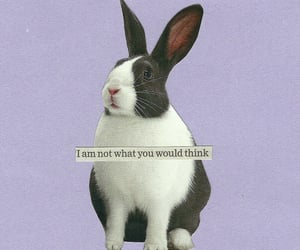 collage art, lilac, and rabbit image