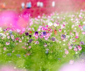 beautiful, calm, and flowers image