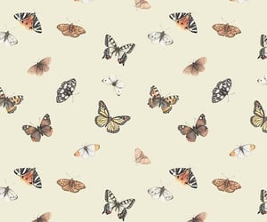 aesthetic, vibes, and butterflies image