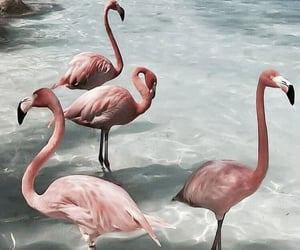 flamingo, animal, and beach image