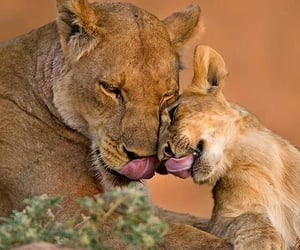 lion and animals image
