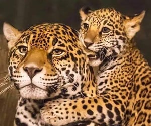 animals, belleza, and naturaleza image