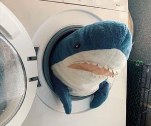 plush and shark image
