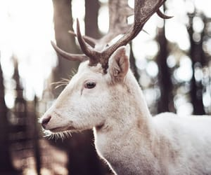 aesthetic, animals, and deer image