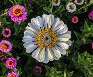 beautiful, flower, and garden image