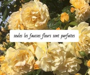 flowers, french, and paris image