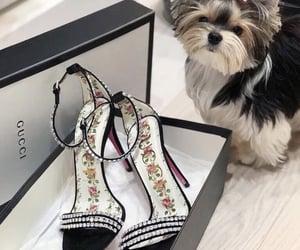 dog, fashion, and gucci image