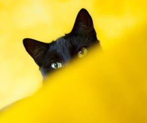 cat, yellow, and black image