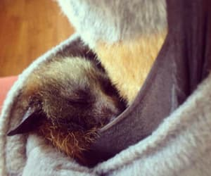 adorable, animals, and bats image