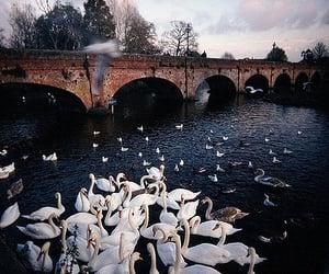 Swan, bridge, and vintage image