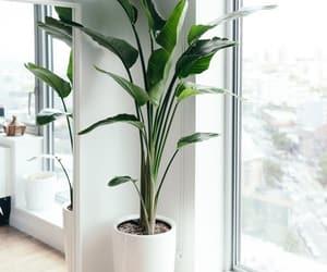 plants, decor, and fresh image