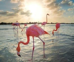 flamingo, beautiful, and beach image