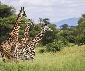 adventure, africa, and animals image