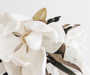 flower, white, and aesthetic image