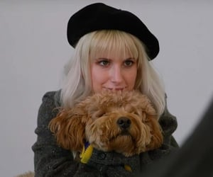 dog, grey, and hayley williams image