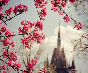 castle, flowers, and pink image