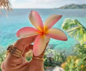 beach, beautiful, and flower image