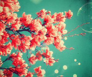 flowers, spring, and bubbles image
