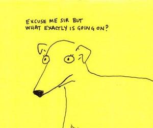 20s, dog, and fun image