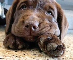 dogs, inspiration, and labrador image