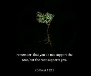 branches, root, and god image