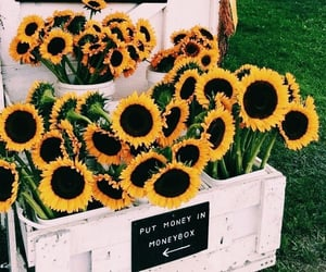 flowers, sunflower, and love image