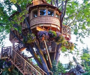 cabin and tree house image