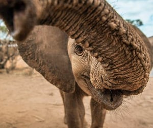 elefantes and elephants image