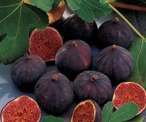 figs, FRUiTS, and healthy image