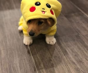corgi, pokemon, and welsh corgi image