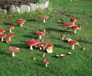 mushroom, fairy, and nature image