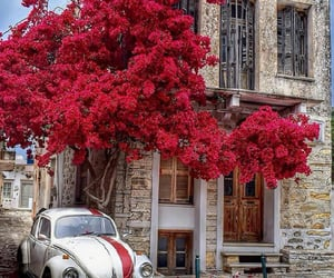red, flowers, and Greece image