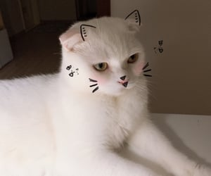 cat, 고양이, and cats image