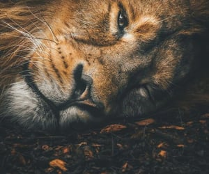 lion and nature image