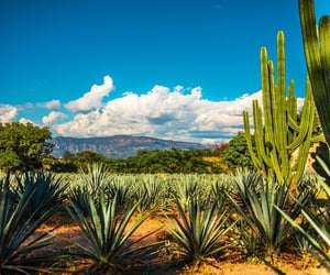 cactus, clouds, and mexicans image