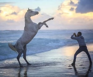 animals, beach, and horse image
