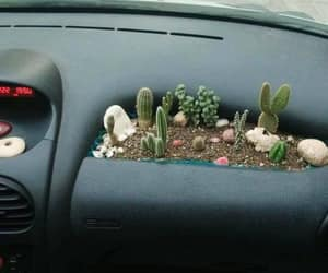 cactus, car, and plants image