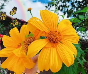August, flowers, and gratitude image