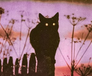 cat, black, and purple image