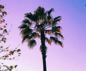 fashion, nails, and palmtrees image