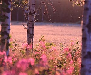 flowers, trees, and amazing gif image