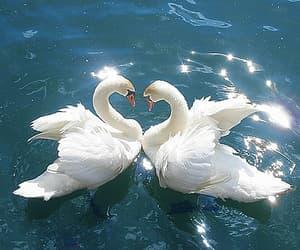 animals, beauty, and beautiful image
